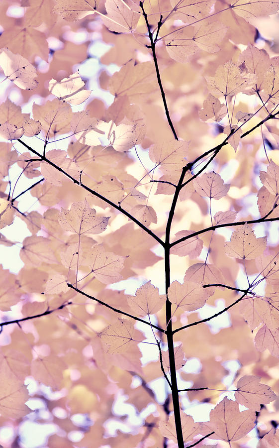 Plum Cream Leaves Melody Photograph