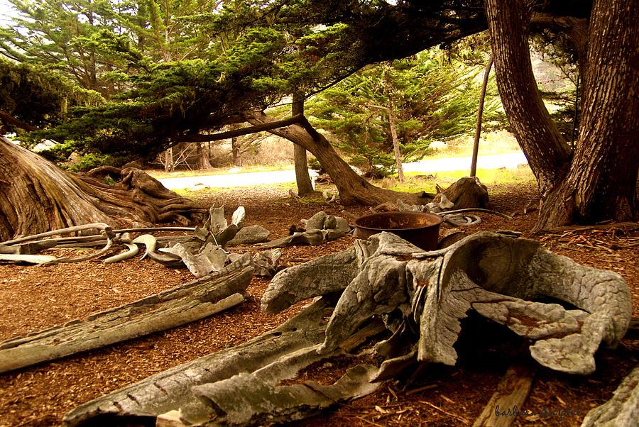 Point Lobos Whalers Cove Whale Bones Digital Art