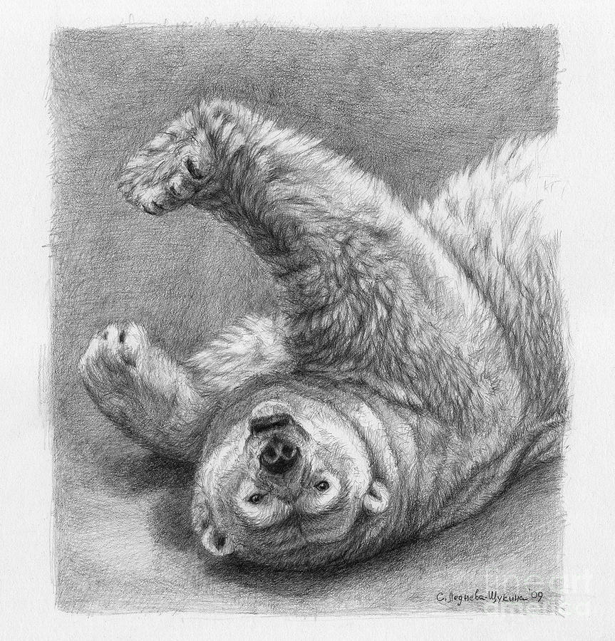 Bear Drawing - Polar Bear Stretch by Svetlana Ledneva-Schukina