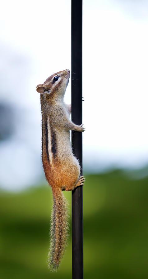 Pole Vaulting Photograph