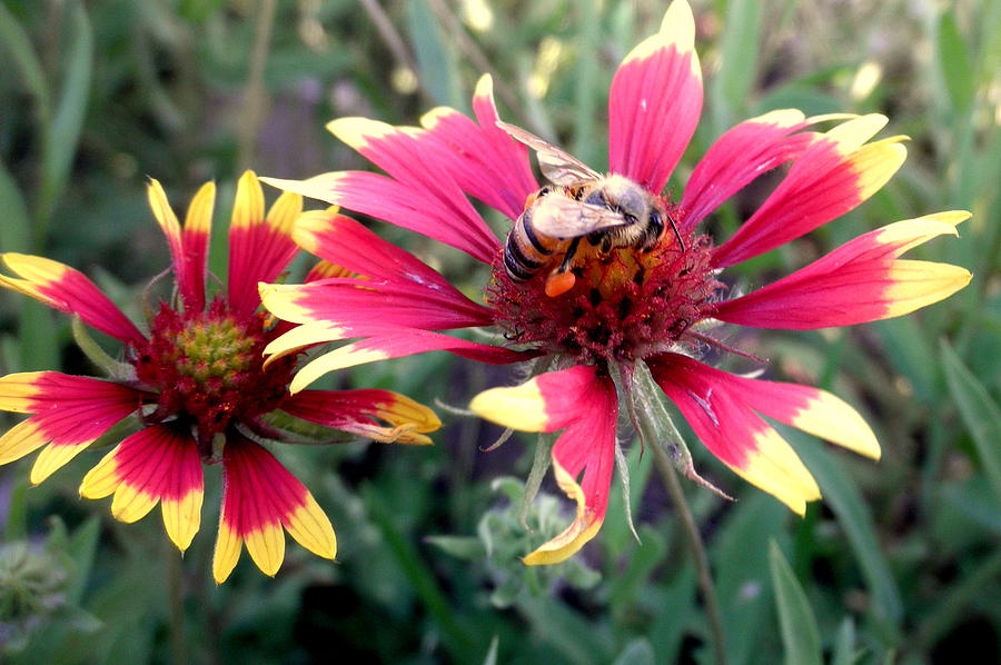Pollination #1 Photograph