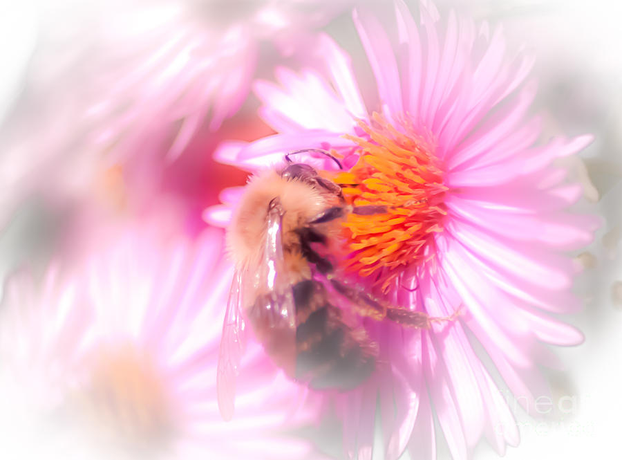Pollination Nation Photograph  - Pollination Nation Fine Art Print