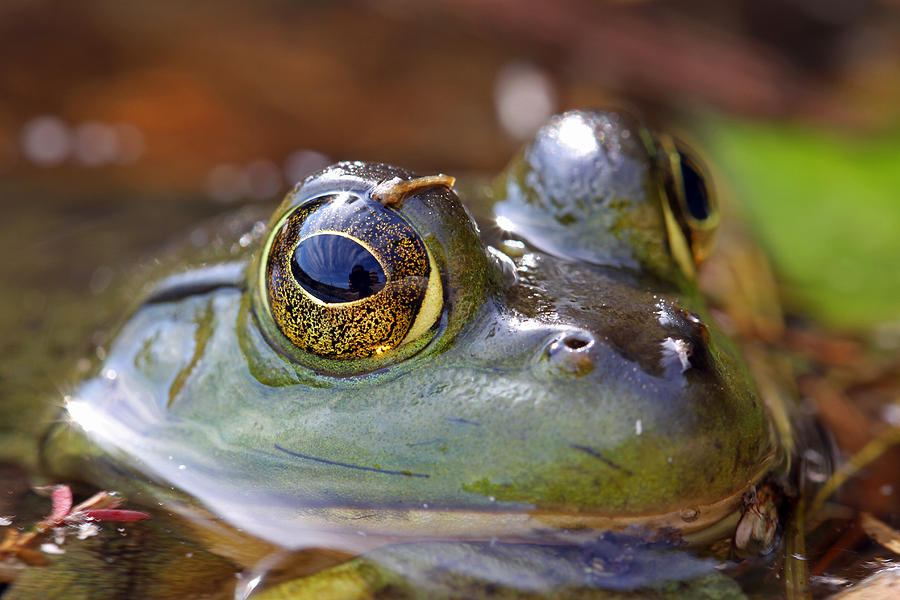 Pond Celebrity Photograph  - Pond Celebrity Fine Art Print