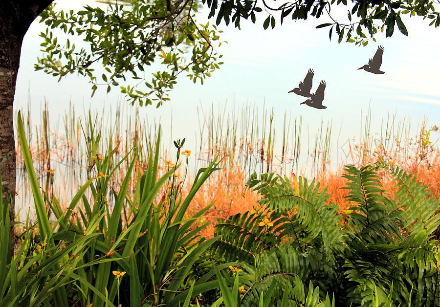 Pond Photograph - Pond View by Rosalie Scanlon