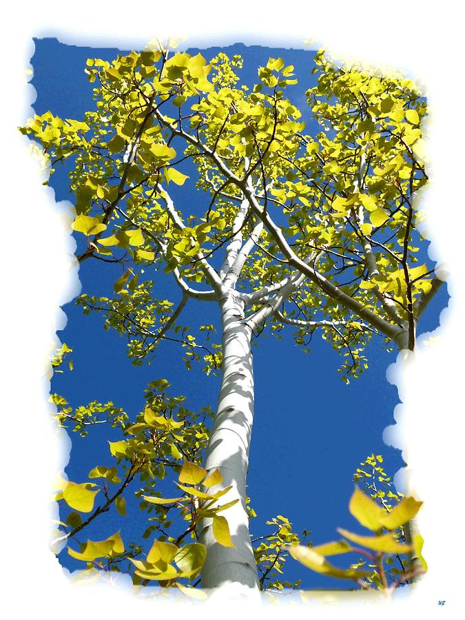 Poplar Tree In Spring  Digital Art  - Poplar Tree In Spring  Fine Art Print