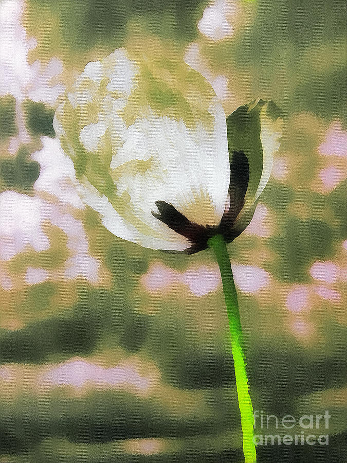 Poppy Flower In The Sky  Painting