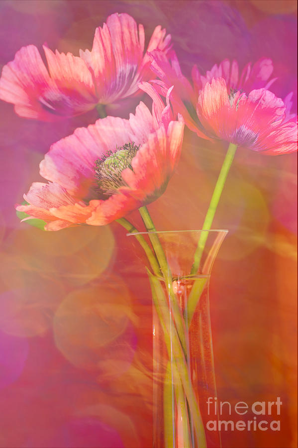 Poppy Passion Photograph  - Poppy Passion Fine Art Print