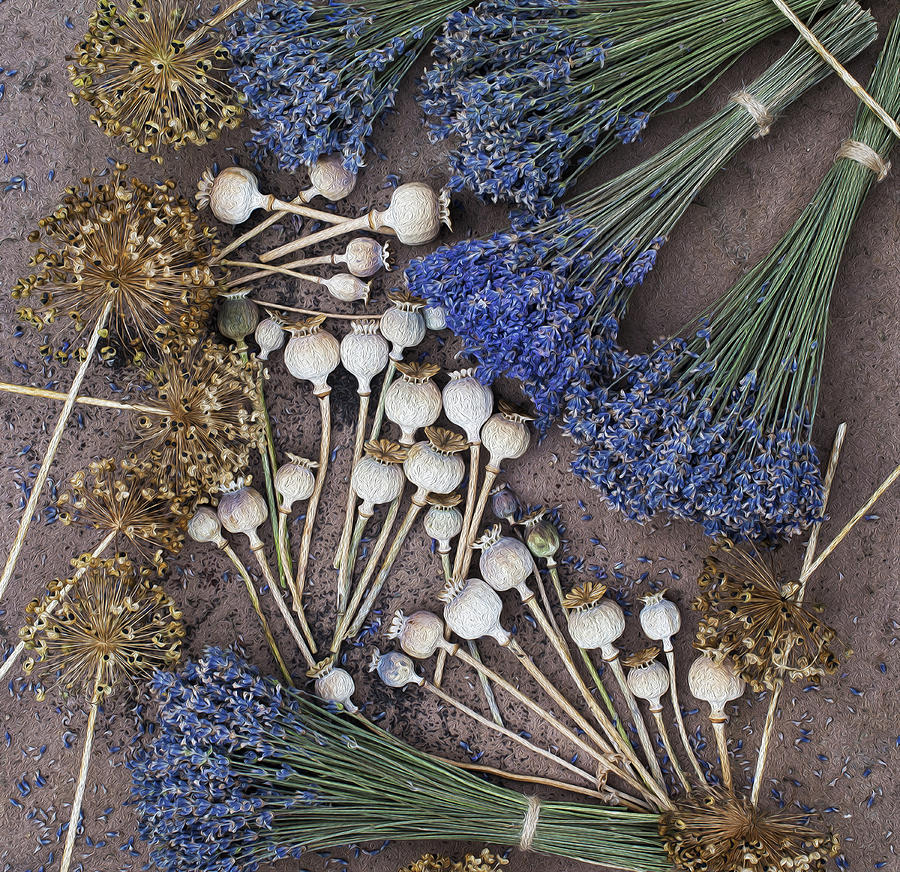 Poppy Seed Pods And Dried Lavender Photograph  - Poppy Seed Pods And Dried Lavender Fine Art Print