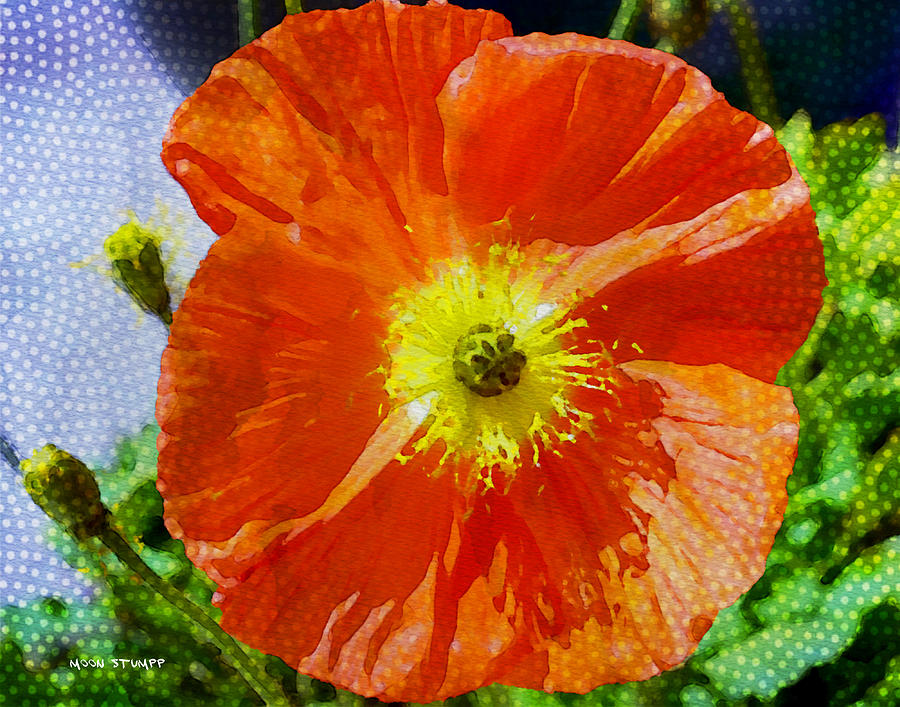 Flowers Photograph - Poppy Series - Opened To The Sun by Moon Stumpp