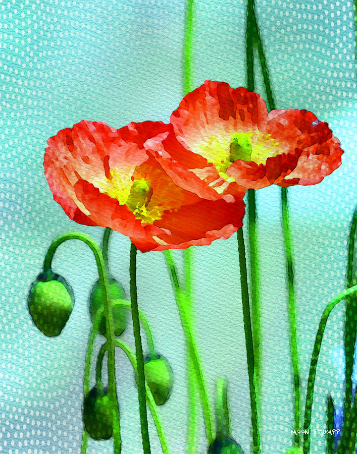 Poppy Series - Quite Photograph  - Poppy Series - Quite Fine Art Print