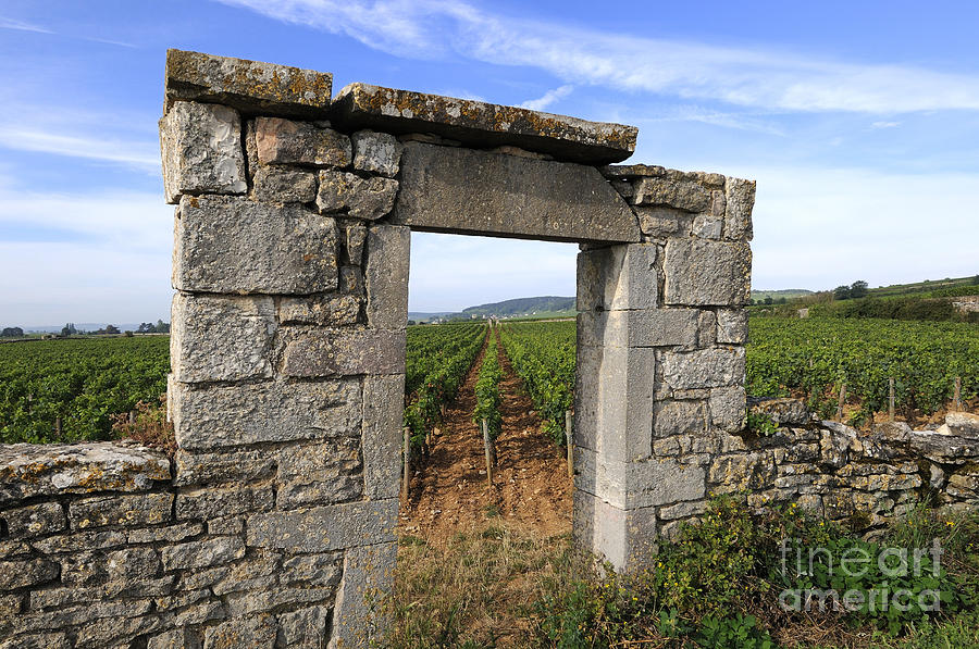 Portal Of Vineyard In Burgundy Near Beaune. Cote Dor. France. Europe Photograph  - Portal Of Vineyard In Burgundy Near Beaune. Cote Dor. France. Europe Fine Art Print