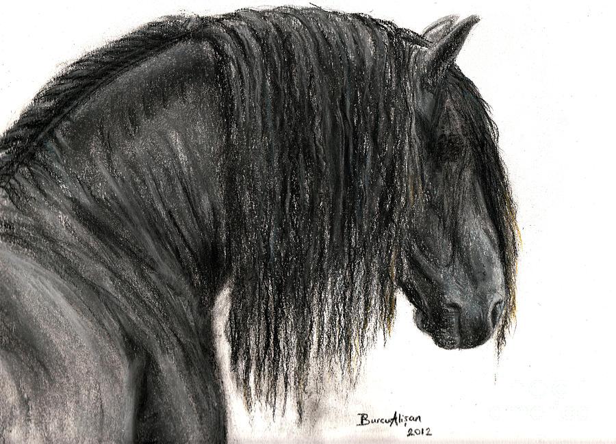 Friesian Head Drawing Horse Head Drawings