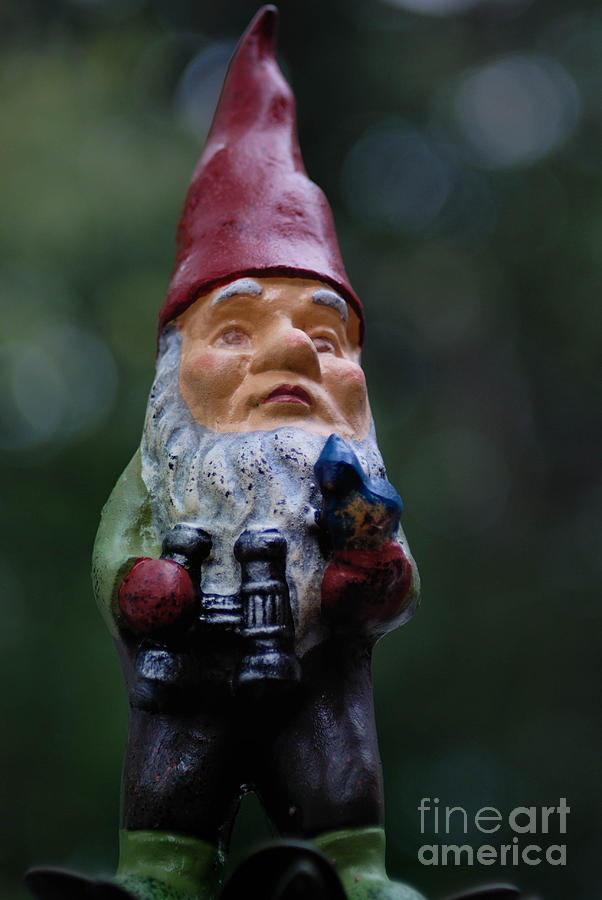Portrait Of A Garden Gnome Photograph  - Portrait Of A Garden Gnome Fine Art Print