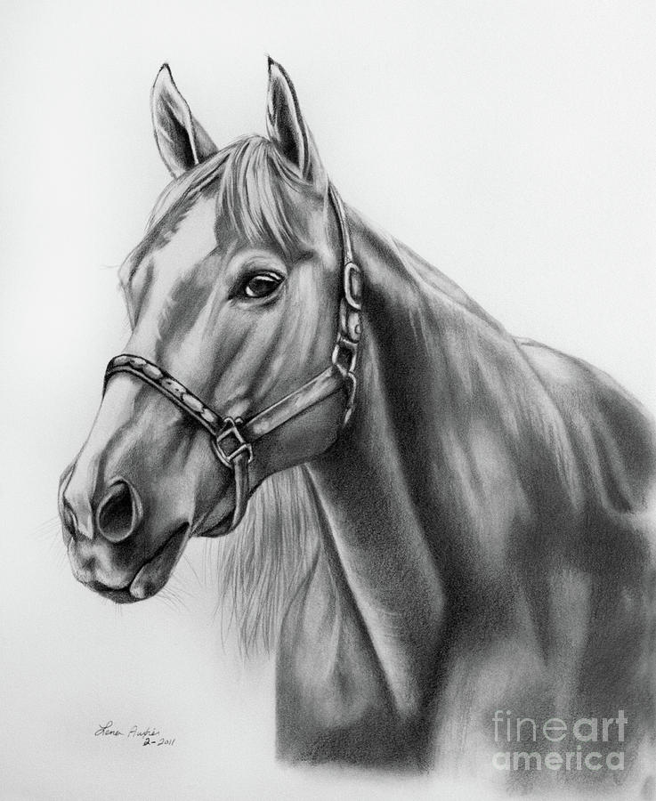 portrait of a horse drawing by lena auxier. Black Bedroom Furniture Sets. Home Design Ideas