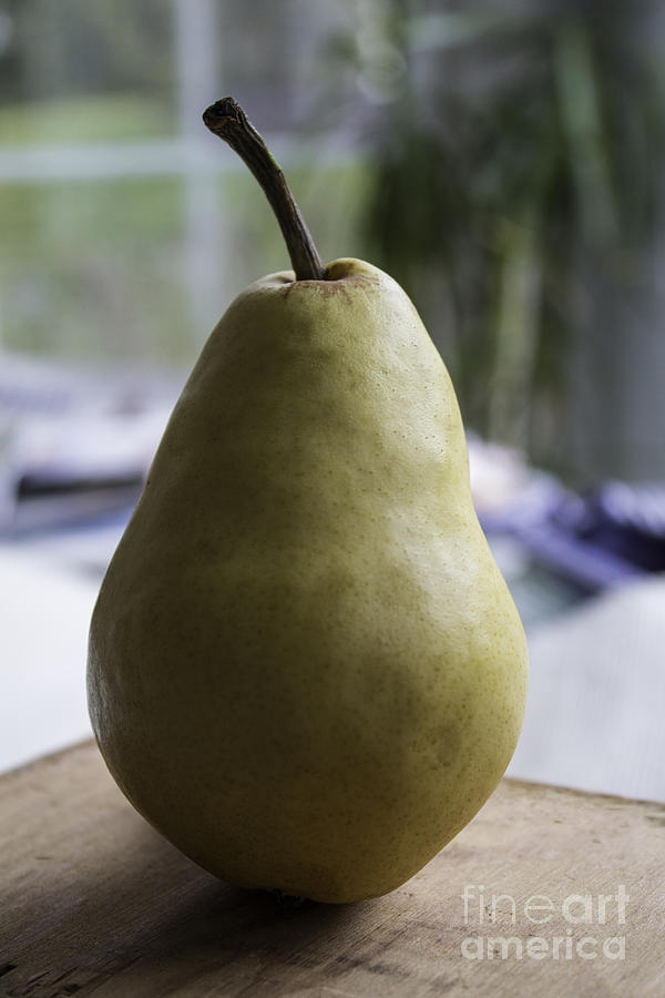 Portrait Of A Pear Photograph  - Portrait Of A Pear Fine Art Print