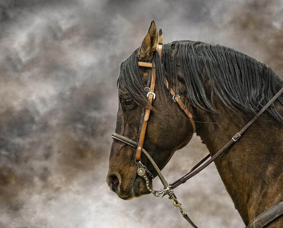 Horse Photograph - Portrait Of A Rope Horse by Jana Thompson