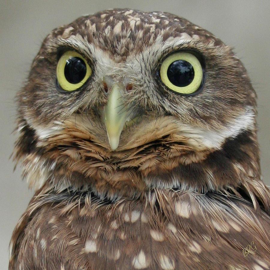 Portrait Of Burrowing Owl Photograph