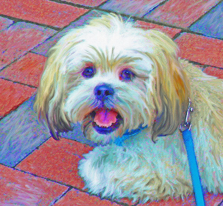 Portrait Of Shih Tzu Digital Art