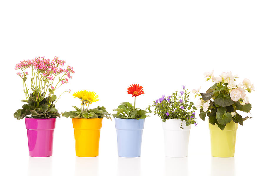 Potted Flowers Photograph