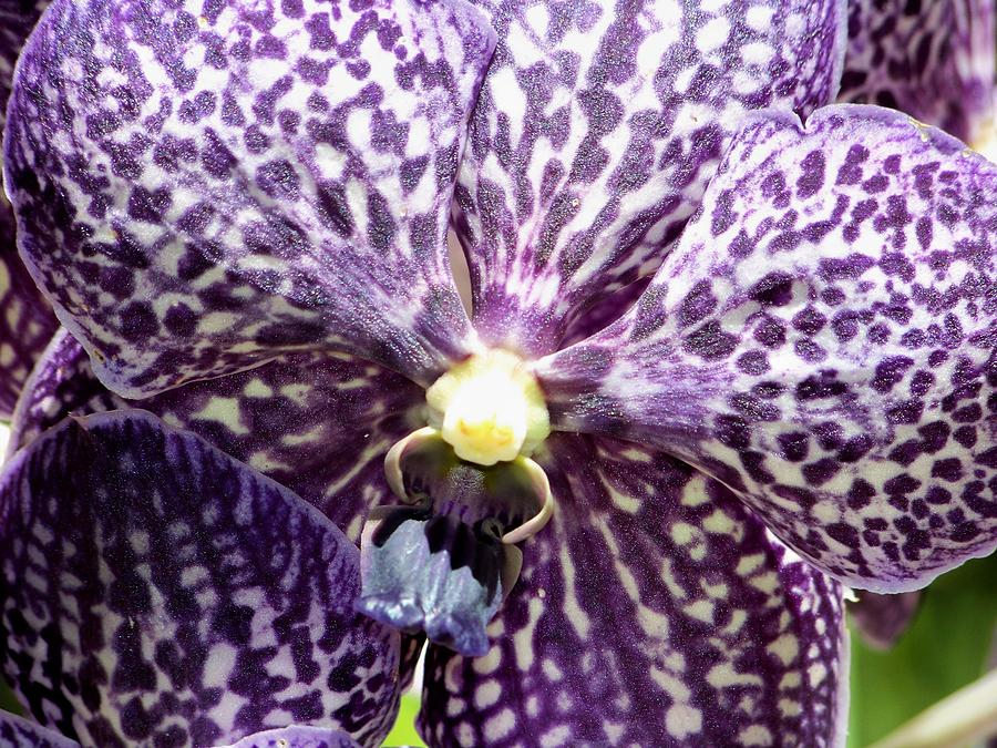 Orchids Photograph - Power Of Purple by Karen Wiles