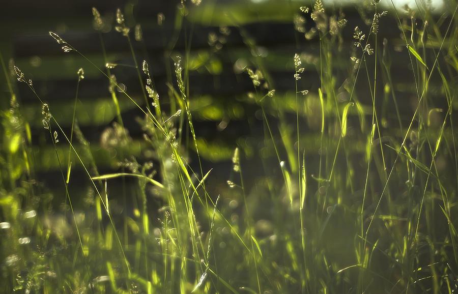 Prairie Grass 1 Photograph