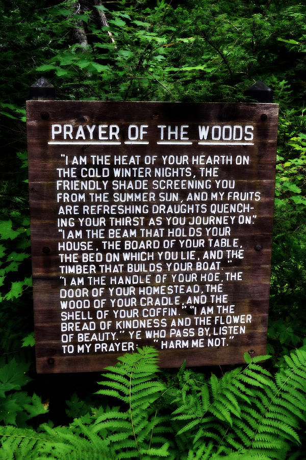 Prayer Of The Woods Photograph