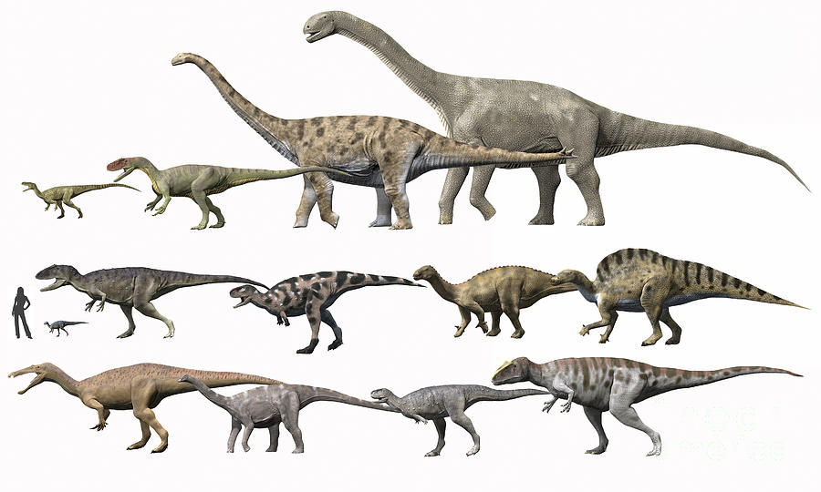 Prehistoric Era Dinosaurs Of Niger Digital Art