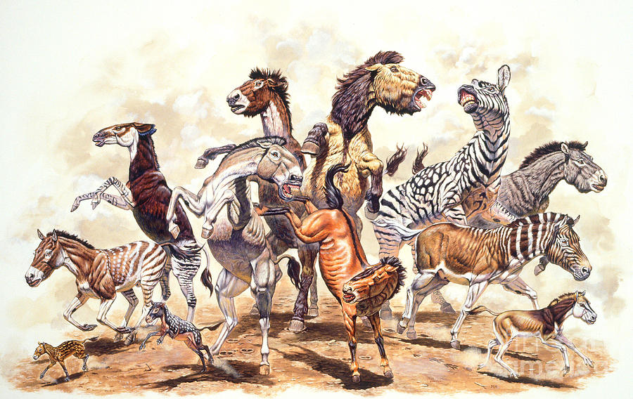 Prehistoric Horses Photograph