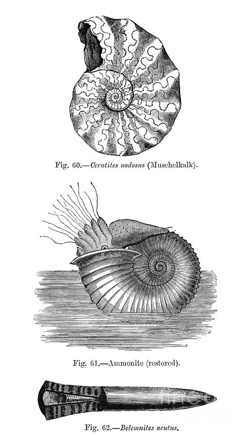 overview of marine invertebrates Many marine organisms, including most marine mammals (whales, dolphins, porpoises and pinnipeds), many marine fish species, and even some invertebrates, use.