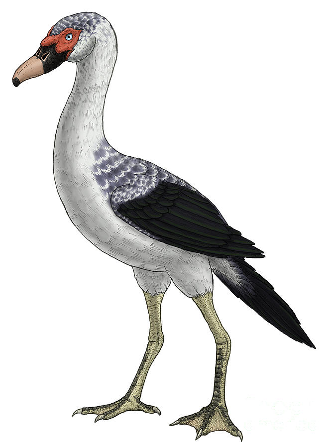 Presbyornis, An Extinct Genus Digital Art