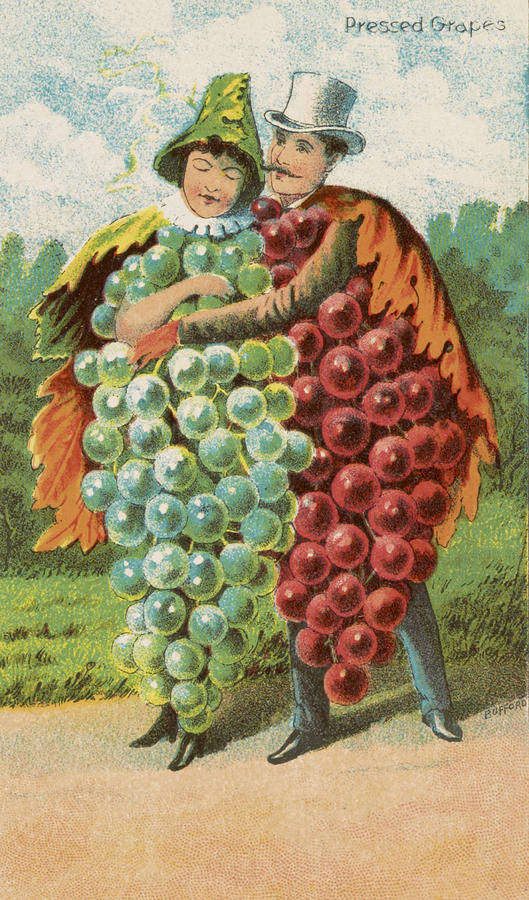 Pressed Grapes Drawing