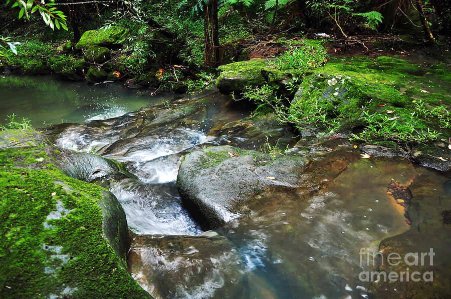 Pretty Green Creek Photograph  - Pretty Green Creek Fine Art Print