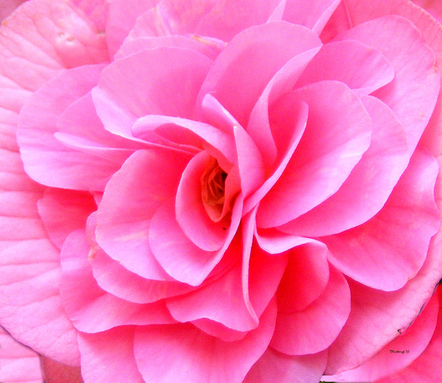 Pretty Pink Flower Blossom Upclose Photograph by Duane ...