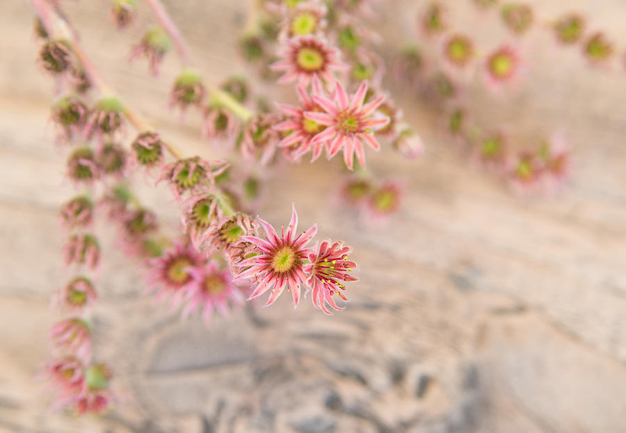 Pretty Pink Flowers Photograph