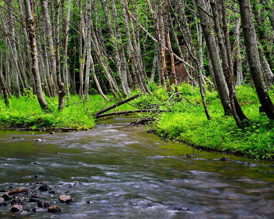 Price Creek  Kittitas County  Washington Photograph by
