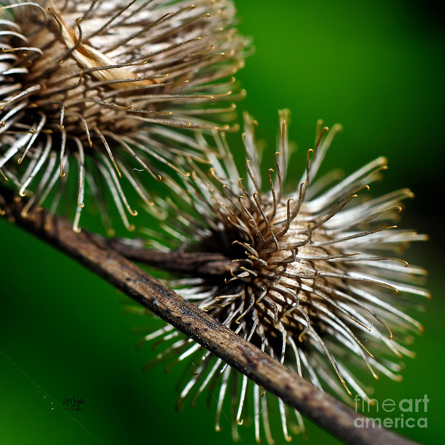 Prickly Photograph