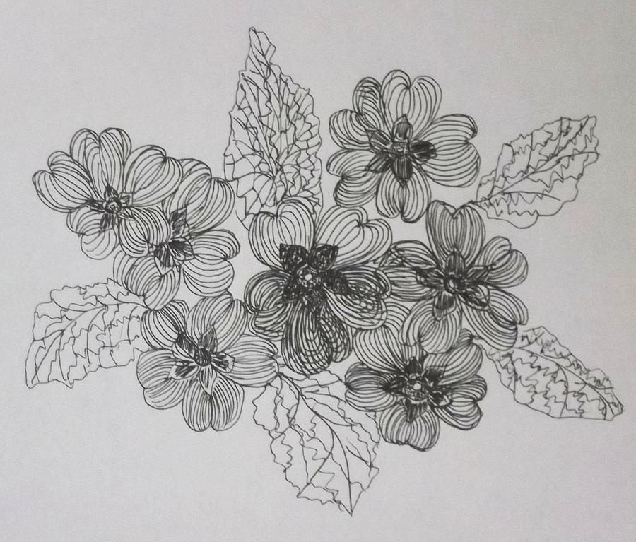 Primroses Drawing by Jill Langdon