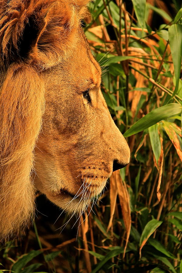 Profiles Of A King Photograph