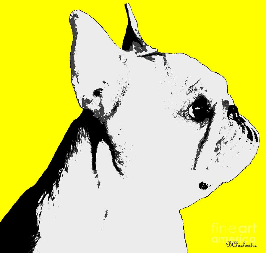 Profiling The Frenchie In Yellow Photograph