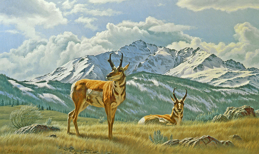 Pronghorn Below Electric Peak Painting