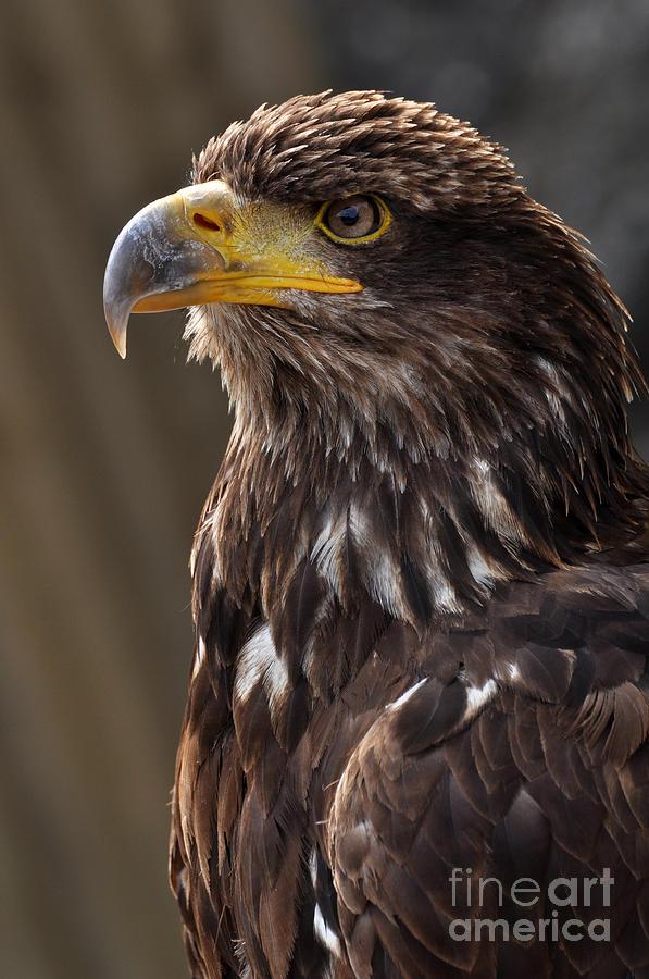 Eagle Photograph - Proud Look by Simona Ghidini