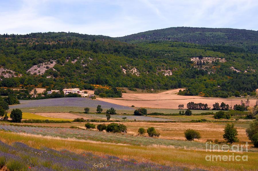 Sault France Lavender Rows Field Fields Provence Landscape Landscapes Flower Flowers Tree Trees Plant Plants Photograph - Provence Landscape by Bob Phillips