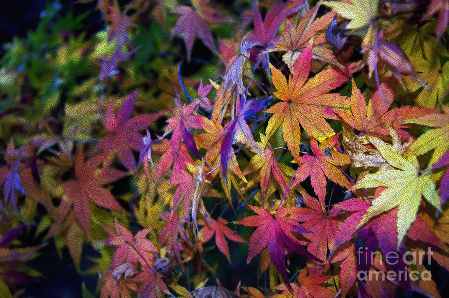 Psychedelic Maple Photograph  - Psychedelic Maple Fine Art Print