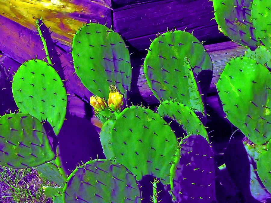 Psychedelic Prickly Pear Photograph