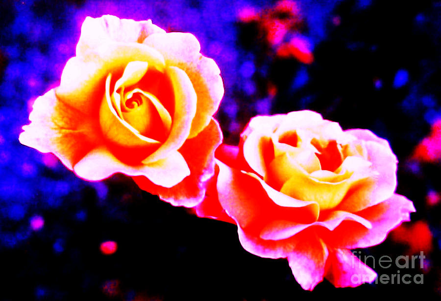 Psychedelic Roses Photograph - Psychedelic Roses by Martin Howard