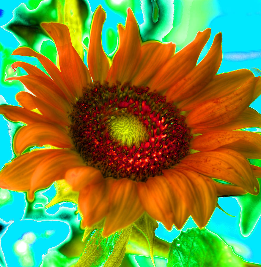 Psychedelic Sunflower Photograph by Richard Ortolano