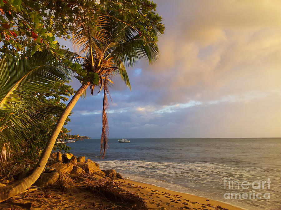 Puerto Rico Palm Lined Beach With Boat At Sunset Photograph  - Puerto Rico Palm Lined Beach With Boat At Sunset Fine Art Print