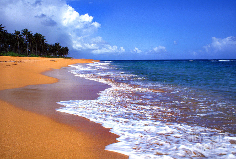 Puerto Rico Shoreline Along Pinones Photograph