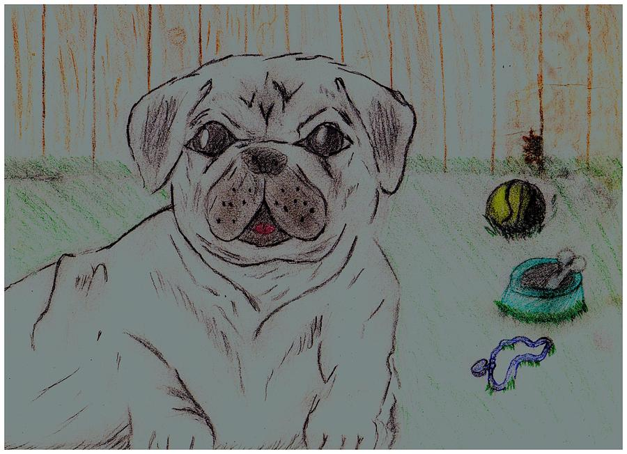 Pug Yard Drawing