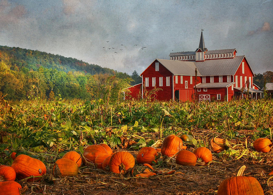 Pumpkin Farm Photograph  - Pumpkin Farm Fine Art Print